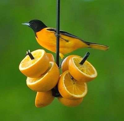 Hand Forged Oriole Fruit Feeder Set of 3