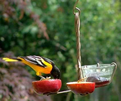 Copper Fruit and Jelly Feeder