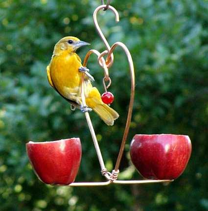 ¿Puede alimentar el pan a los pájaros? - Página 2 - Espía Digital