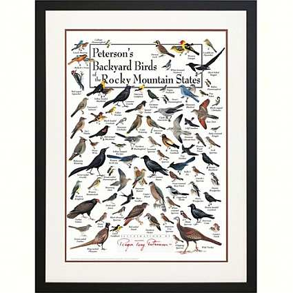 Peterson's Birds of the Rocky Mountains Poster