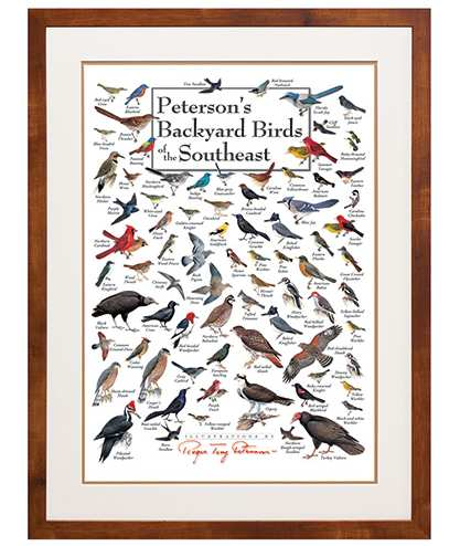 Peterson's Birds of the Southeast Poster