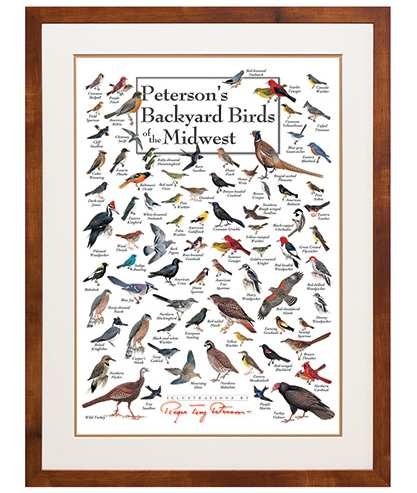 Peterson's Birds of the Midwest Poster