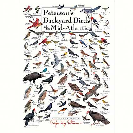 Birds of Mid-Atlantic Greeting Cards Set of 6