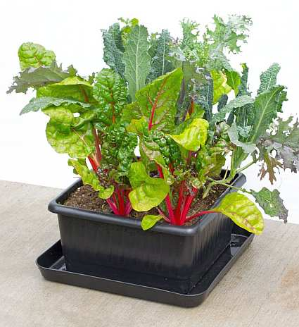Metro-Grower Elite Container System 2 Unit Kit