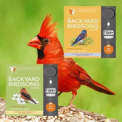 The Backyard Birdsong Guide: North America 2 Volume Set, A Guide To  Listening, Bird Song Guides At Songbird Garden