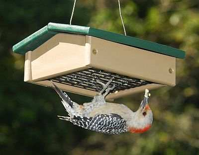 Rubicon Recycled Upside Down Suet Feeder