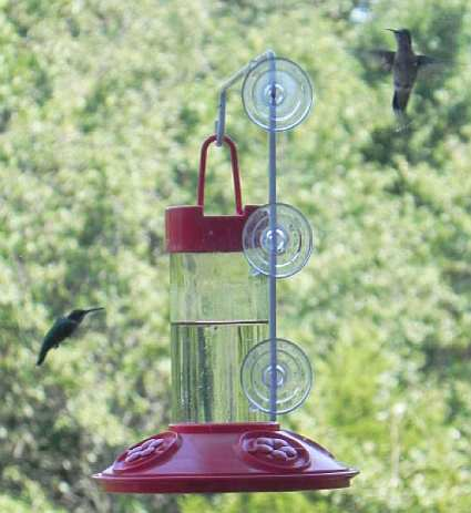 Dr. JB's 16oz Hummingbird Window Feeder All Red