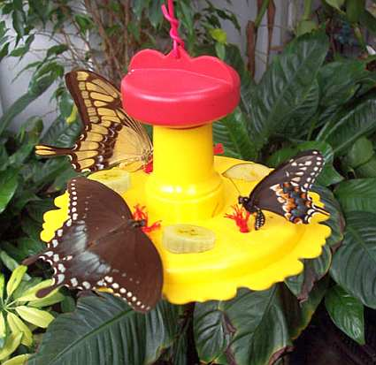 Songbird Butterfly Feeder