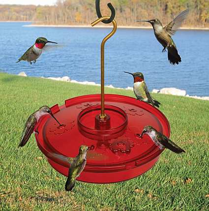 Hummingbird Haven Feeder