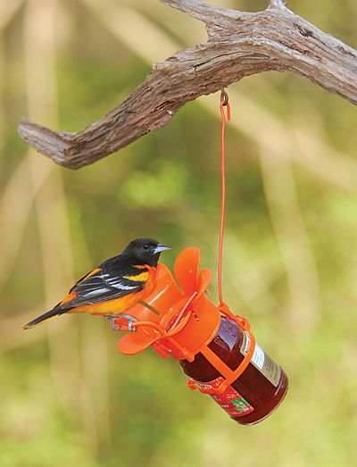 Fliteline Jelly/Jam Oriole Feeder Twin Pack