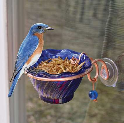 Copper Bluebird Mealworm Window Feeder