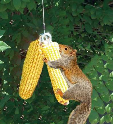 Squngee Deluxe Squirrel Feeder Bungee Jumper