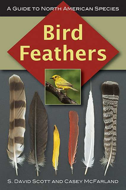 Bird Feathers A Guide To North American Species