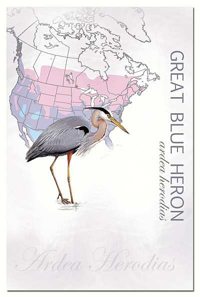 EcoNotes Great Blue Heron Set of 12