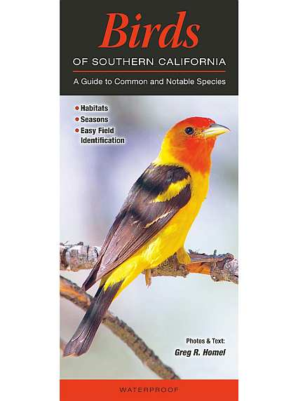 State Bird Watching Guides State And Regional Birding