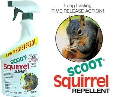 Squirrel Repellents Squirrel Deterrents That Repel Squirrels From Raiding Bird Feeders At