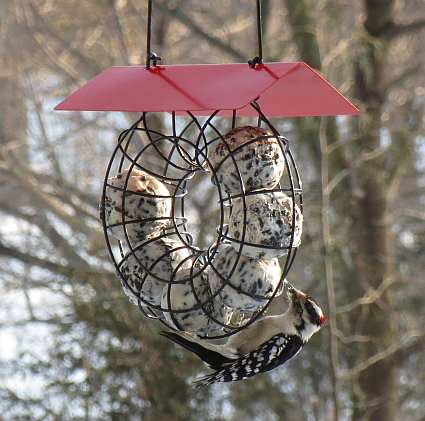 Chapelwood oval spring suet feeder set of 3 quality for How to make suet balls for bird feeders