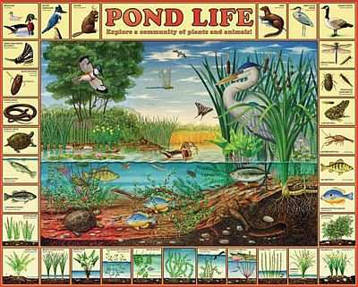 White mountain puzzles pond life 1000 piece jigsaw puzzle for Backyard pond animals