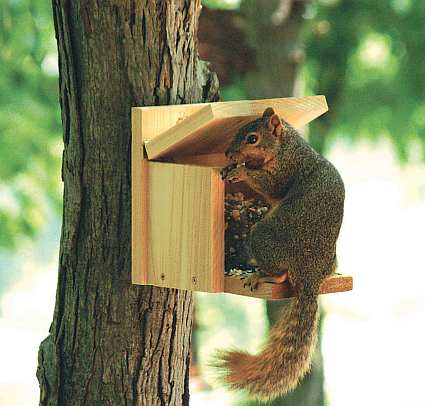Woodwork Homemade Squirrel Feeder Plans Plans Pdf Download