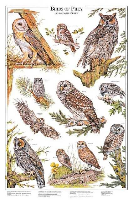 British Birds of Prey