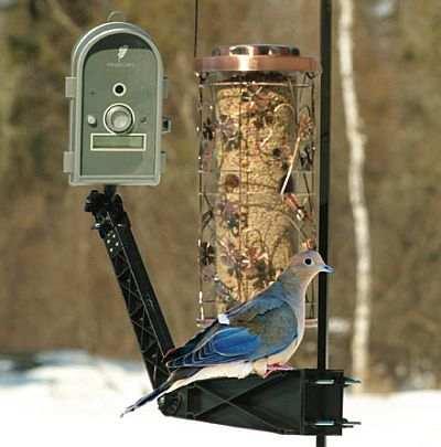 Best 28 Bird Cameras Wireless Wildlife And Bird
