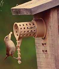 wren climbing ladder on the bird guardian