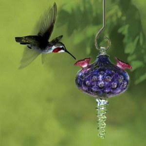 Making Your Own Hummingbird And Oriole Nectar At