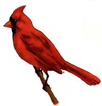 Cardinals belong to a group of birds called grosbeaks meaning that