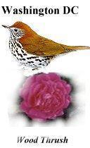 Washington DC State Bird