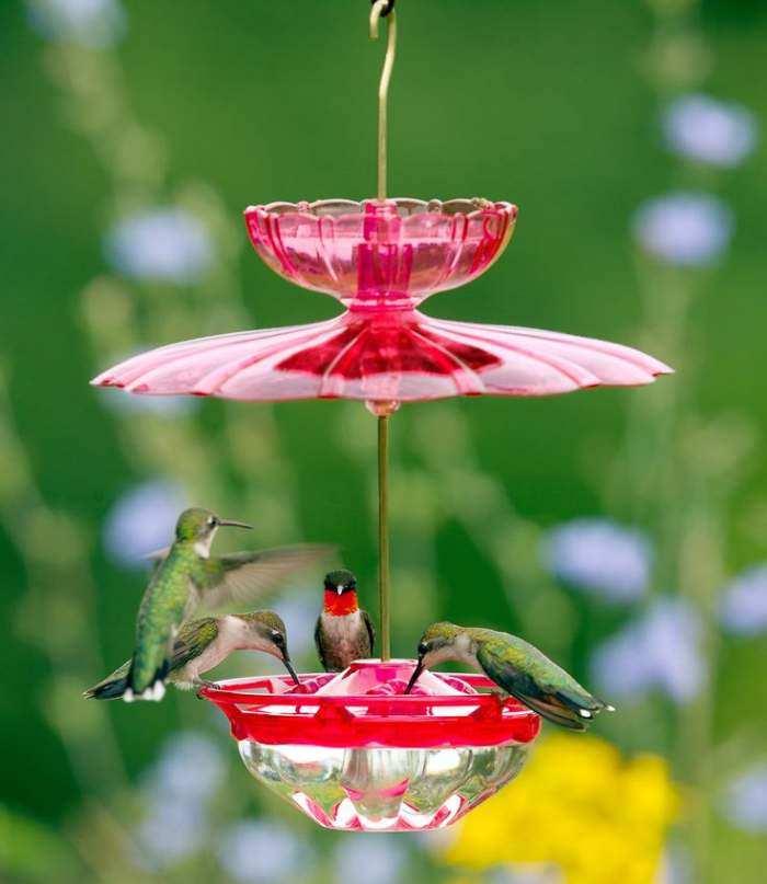 Dish Or Saucer Hummingbird Feeders Quality Style At Songbird Garden