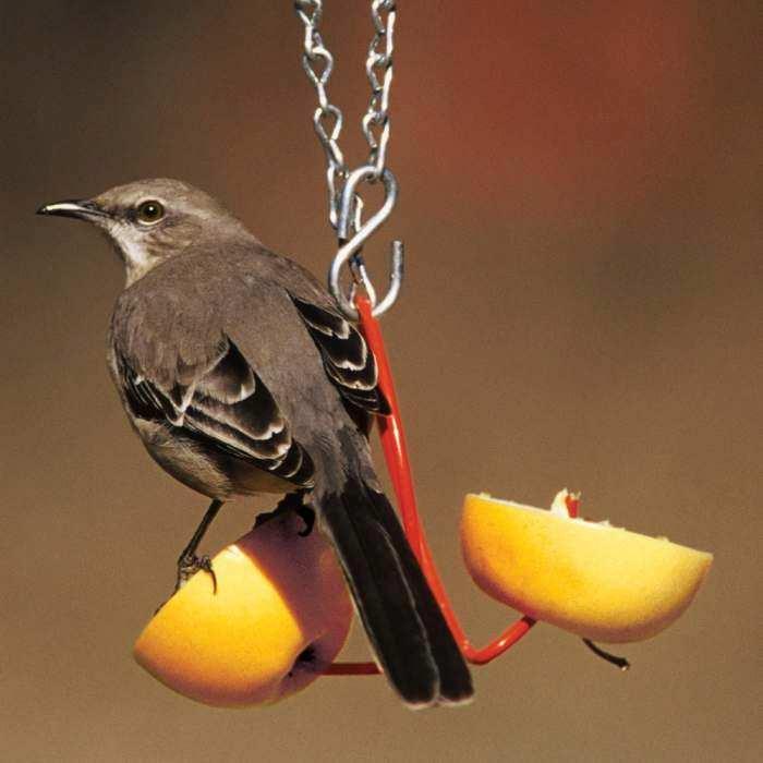 oriole feeders oriole bird feeders for feeding and attracting