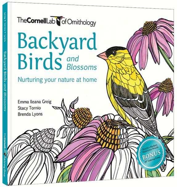 Bird Books Field Guides Identification For North America Birds Birding US And Canada At Songbird Garden