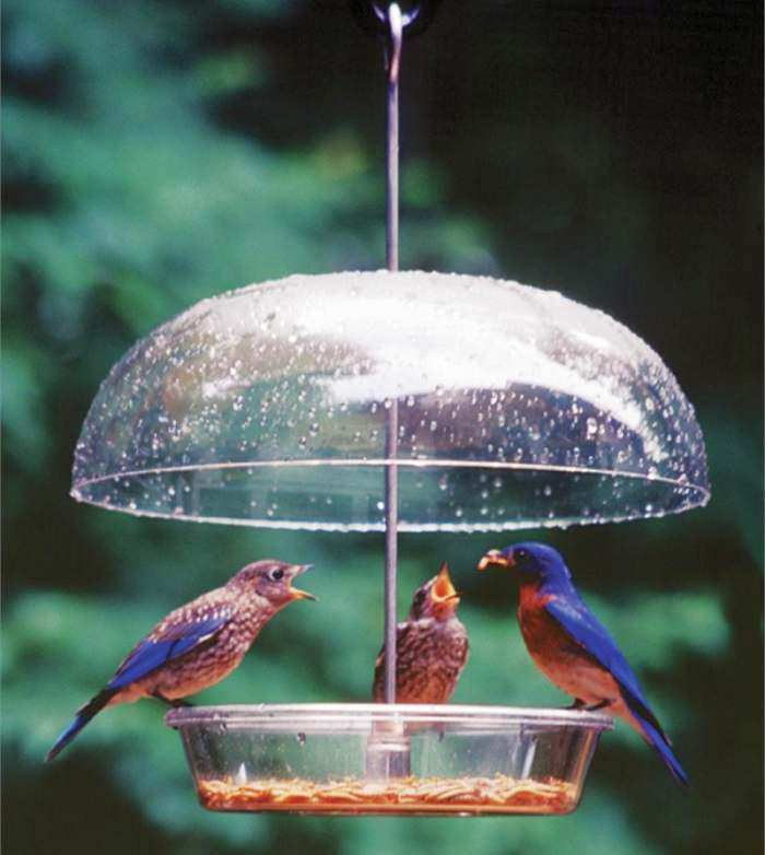 feeder transparent showroom feeders plastic suppliers at and bird manufacturers com alibaba acrylic