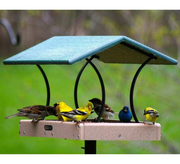 hummingbirds moat digest whilma dsouza for watcher bwdsite feeders diy at ant a d souza s bird yellow by backyard photo nectar feeder