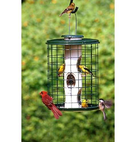 Caged Bird Feeders that Discourage Squirrels, Quality Bird Feeders With Squirrel Cages at Songbird Garden