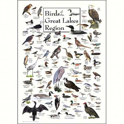 Bird identification wall posters and calendars bird id wall charts bird identification wall posters and calendars bird id wall charts bird species identification wild bird identification at songbird garden publicscrutiny Gallery
