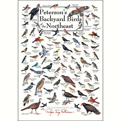 Bird Identification Wall Posters And Calendars Id Charts Species Wild At Songbird Garden