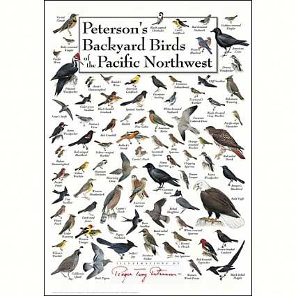 Bird Identification Wall Posters and Calendars, Bird ID Wall Charts, Bird  Species Identification, Wild Bird Identification at Songbird Garden - Bird Identification Wall Posters And Calendars, Bird ID Wall Charts