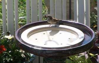Bird Bath Agitators Birdbath Drippers Misters Water Wigglers Waterfall Rocks At Songbird Garden