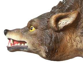 3D-Coyote