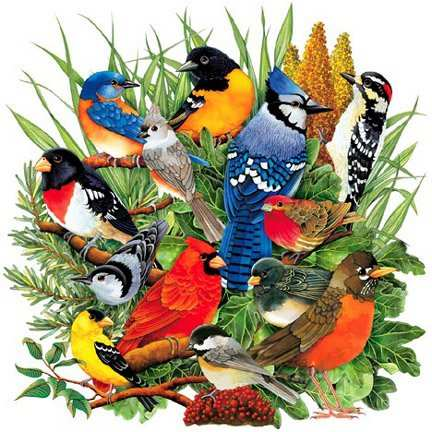Bird Collage - Bird Sounds and Bird Calls