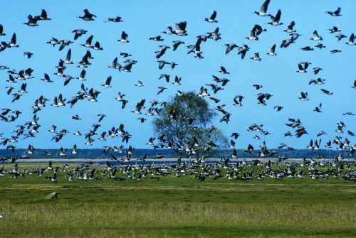 Opinión: Los colibríes, los gansos son buena compañía | Publicación actual