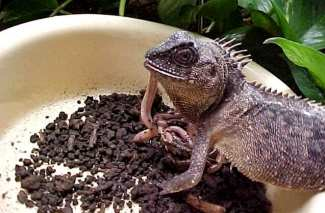 How To Store Live Lizard Food