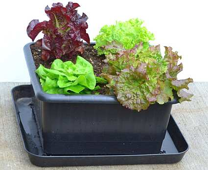 Metro-Grower Basic Sub-Irrigation Garden Container