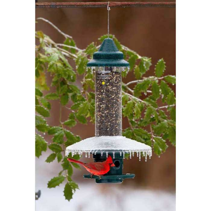 Squirrel Buster Plus Bird Feeder w/Weather Guard