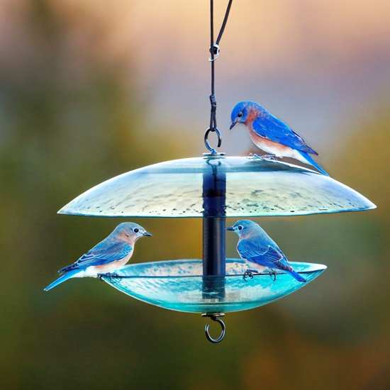 Recycled Glass Bird Feeder w/Weather Baffle Dome
