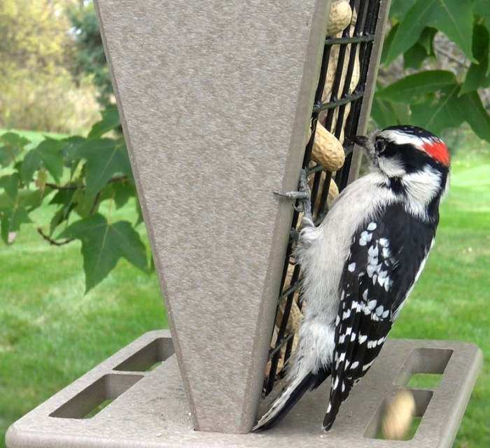 Songbird Recycled Poly Whole Peanut Feeder