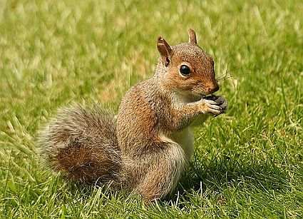 Some Facts About Squirrels - Squirrel Information and Facts at ...